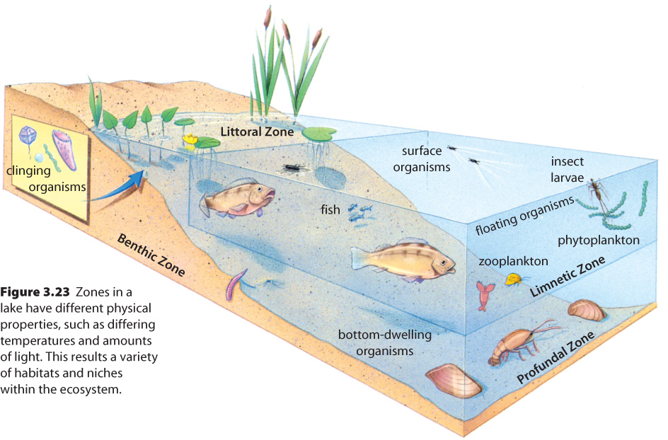 describe the geographical distribution of organisms in an ecosystem Describe and illustrate biotic and abiotic factors that affect the distribution of organisms 11 explain how climate affects the geographic distribution of organisms.